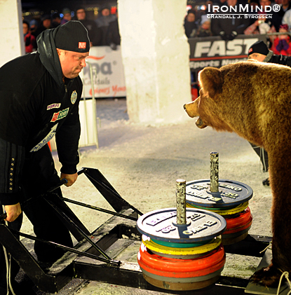 If your deadlifts are stuck, try this trick for motivation: go eyeball to eyeball with a bear, as Zydrunas Savickas did at the SCL Iceman today.  IronMind® | Randall J. Strossen photo.